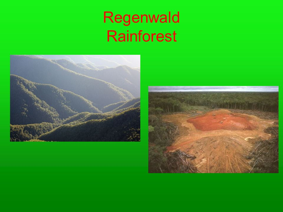 Regenwald Rainforest