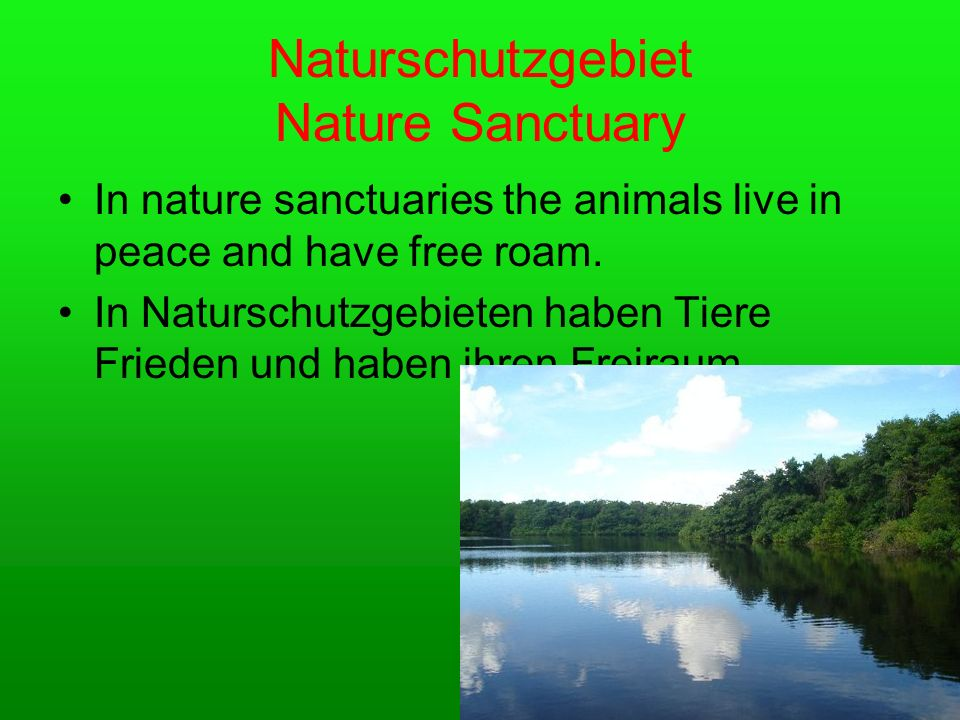 Naturschutzgebiet Nature Sanctuary In nature sanctuaries the animals live in peace and have free roam.