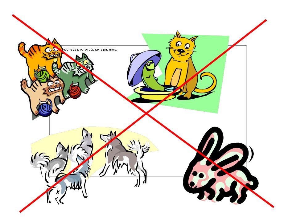 Ich habe……. einen Hund eine Katze ein Meerschweinchen eine Maus eine Schlange kein Haustier einen Wellensittich einen Papagei ein Kaninchen