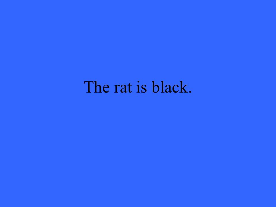 The rat is black.