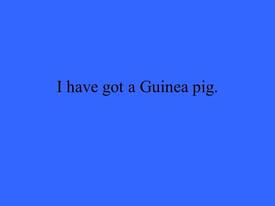 I have got a Guinea pig.