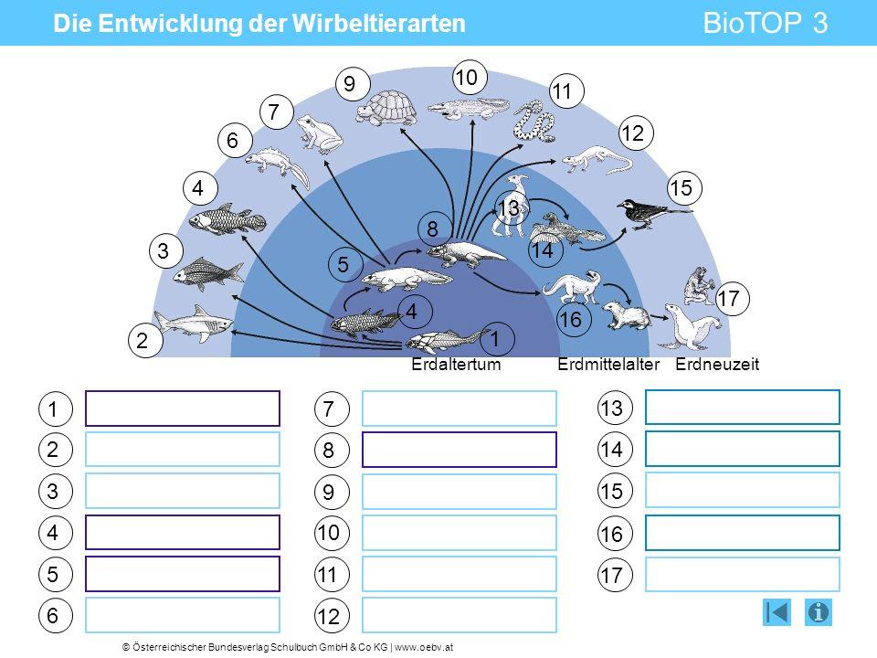 © Österreichischer Bundesverlag Schulbuch GmbH & Co KG | www.oebv.at BioTOP 3 Die Entwicklung der Wirbeltierarten 1 2 3 4 5 6 7 8 9 10 11 12 13 14 15