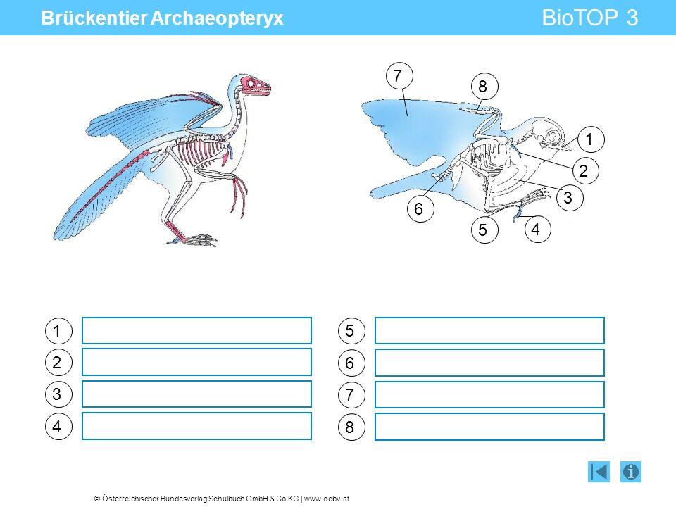 © Österreichischer Bundesverlag Schulbuch GmbH & Co KG | www.oebv.at BioTOP 3 Brückentier Archaeopteryx 1 2 3 4 5 6 7 8 1 2 3 4 5 6 7 8
