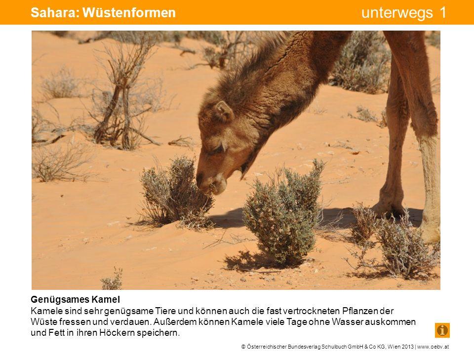© Österreichischer Bundesverlag Schulbuch GmbH & Co KG, Wien 2013 | www.oebv.at unterwegs 1 Sahara: Wüstenformen Genügsames Kamel Kamele sind sehr gen