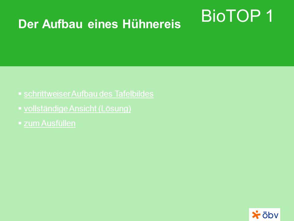 BioTOP 1 Der Aufbau eines Hühnereis schrittweiser Aufbau des Tafelbildes vollständige Ansicht (Lösung) zum Ausfüllen