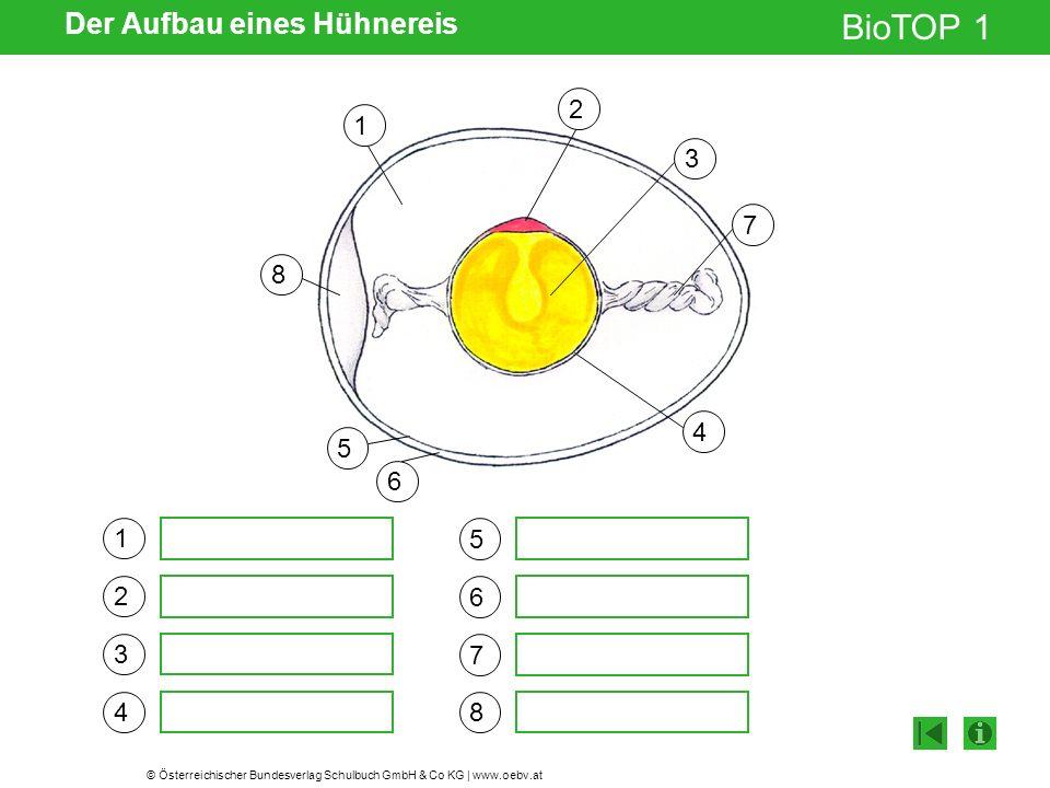 © Österreichischer Bundesverlag Schulbuch GmbH & Co KG   www.oebv.at BioTOP 1 Der Aufbau eines Hühnereis 1 2 3 4 5 6 7 8 8 1 2 3 4 5 6 7