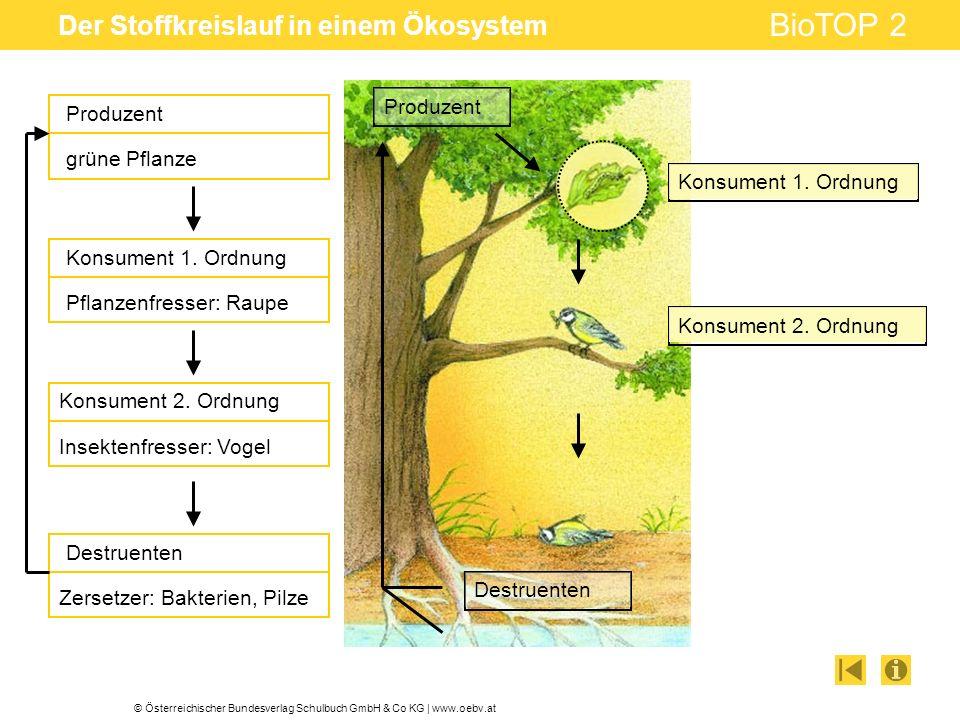 © Österreichischer Bundesverlag Schulbuch GmbH & Co KG | www.oebv.at BioTOP 2 Der Stoffkreislauf in einem Ökosystem Produzent Konsument 1. Ordnung Kon