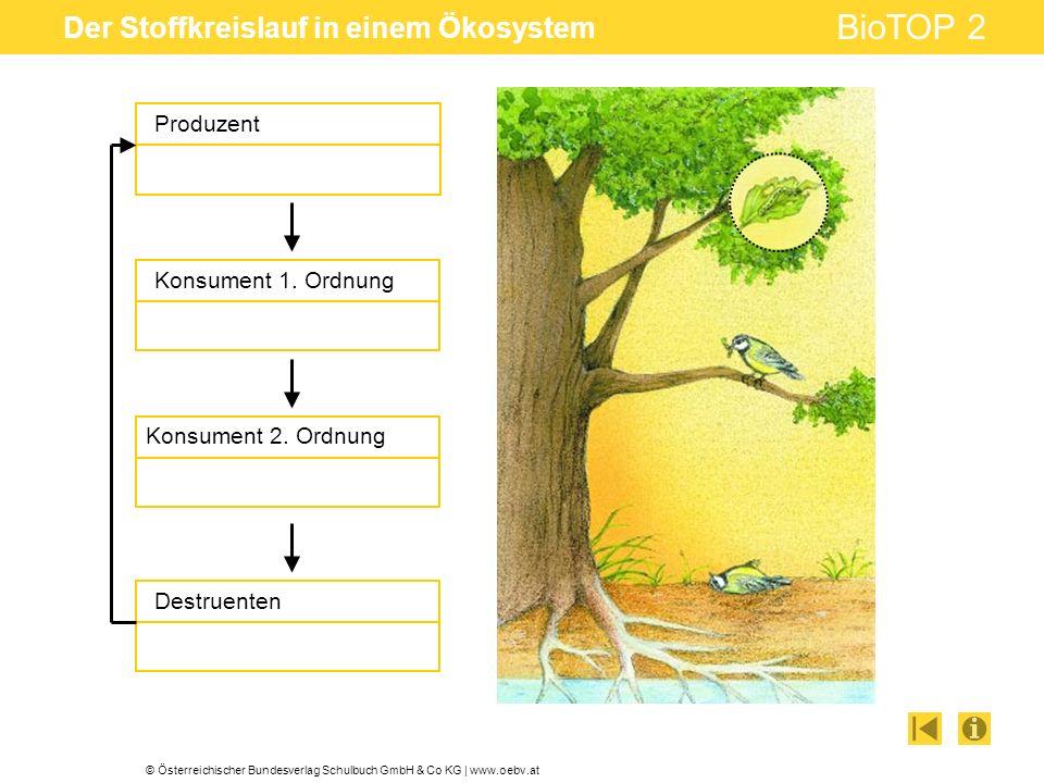 © Österreichischer Bundesverlag Schulbuch GmbH & Co KG | www.oebv.at BioTOP 2 Der Stoffkreislauf in einem Ökosystem Produzent Konsument 1. Ordnung Des