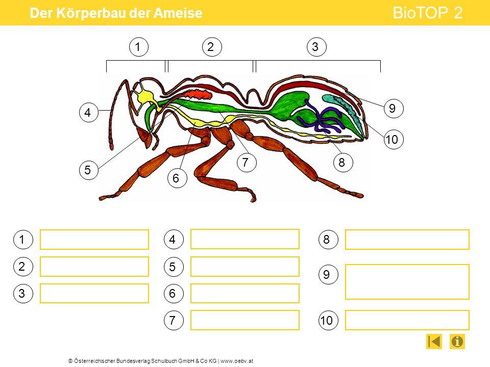 © Österreichischer Bundesverlag Schulbuch GmbH & Co KG | www.oebv.at BioTOP 2 Der Körperbau der Ameise 1 2 3 4 5 6 123 4 5 6 78 9 10 7 8 9