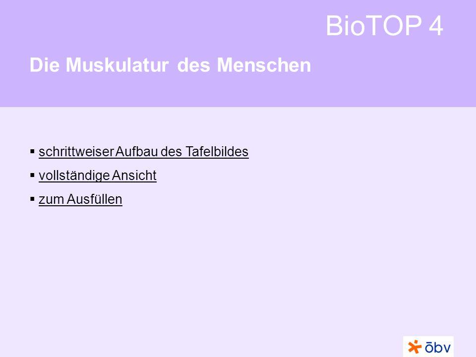 BioTOP 4 Die Muskulatur des Menschen schrittweiser Aufbau des Tafelbildes vollständige Ansicht zum Ausfüllen