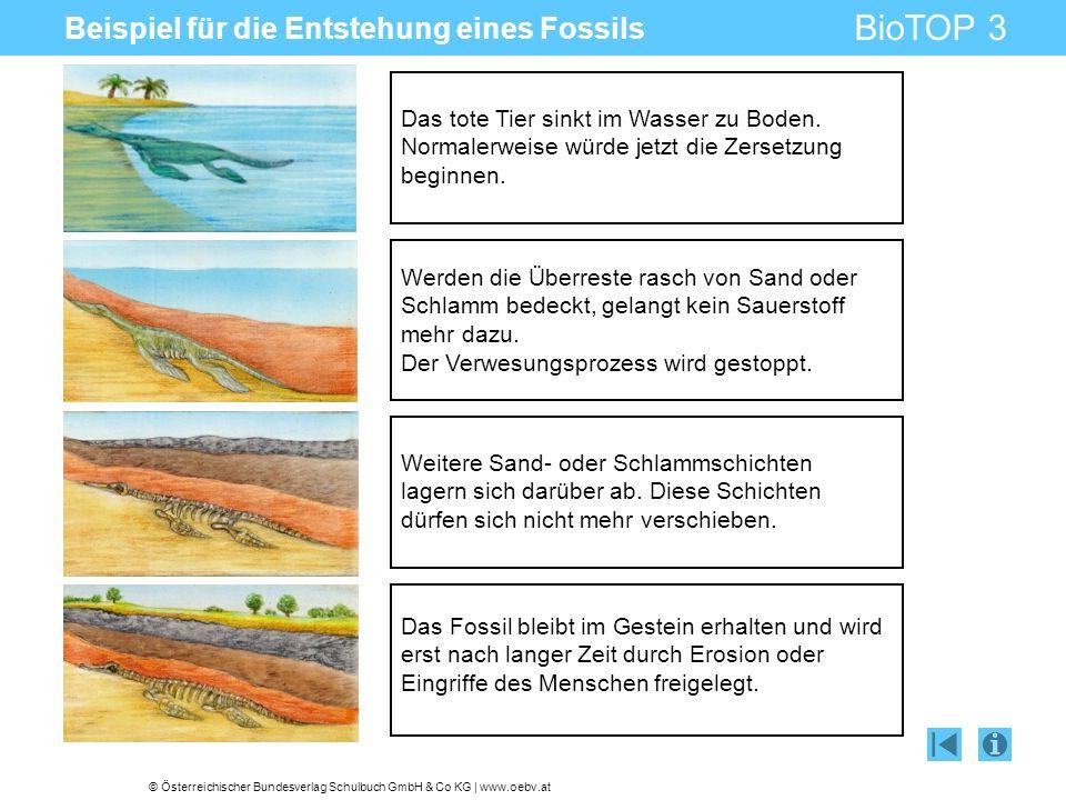 © Österreichischer Bundesverlag Schulbuch GmbH & Co KG | www.oebv.at BioTOP 3 Beispiel für die Entstehung eines Fossils Das tote Tier sinkt im Wasser