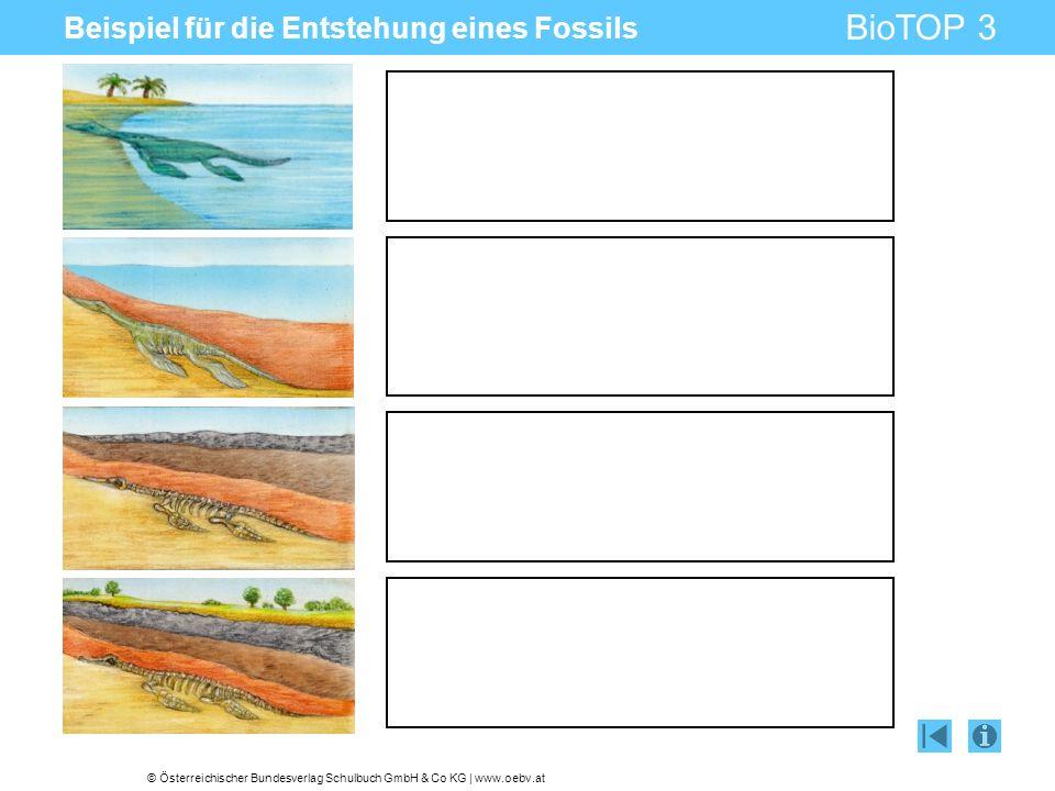 © Österreichischer Bundesverlag Schulbuch GmbH & Co KG | www.oebv.at BioTOP 3 Beispiel für die Entstehung eines Fossils