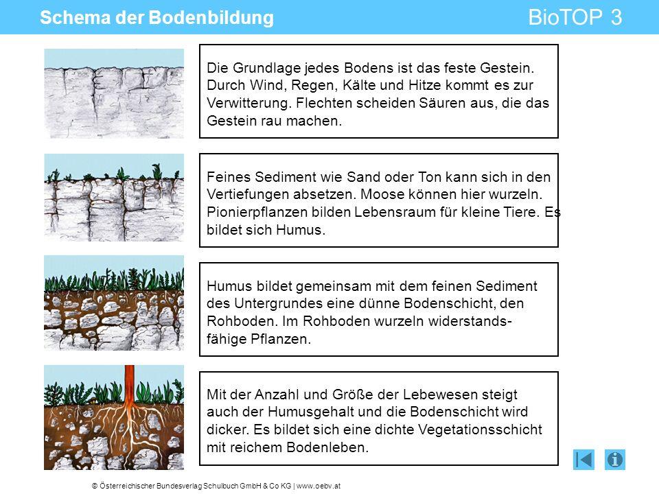 © Österreichischer Bundesverlag Schulbuch GmbH & Co KG | www.oebv.at BioTOP 3 Schema der Bodenbildung Die Grundlage jedes Bodens ist das feste Gestein