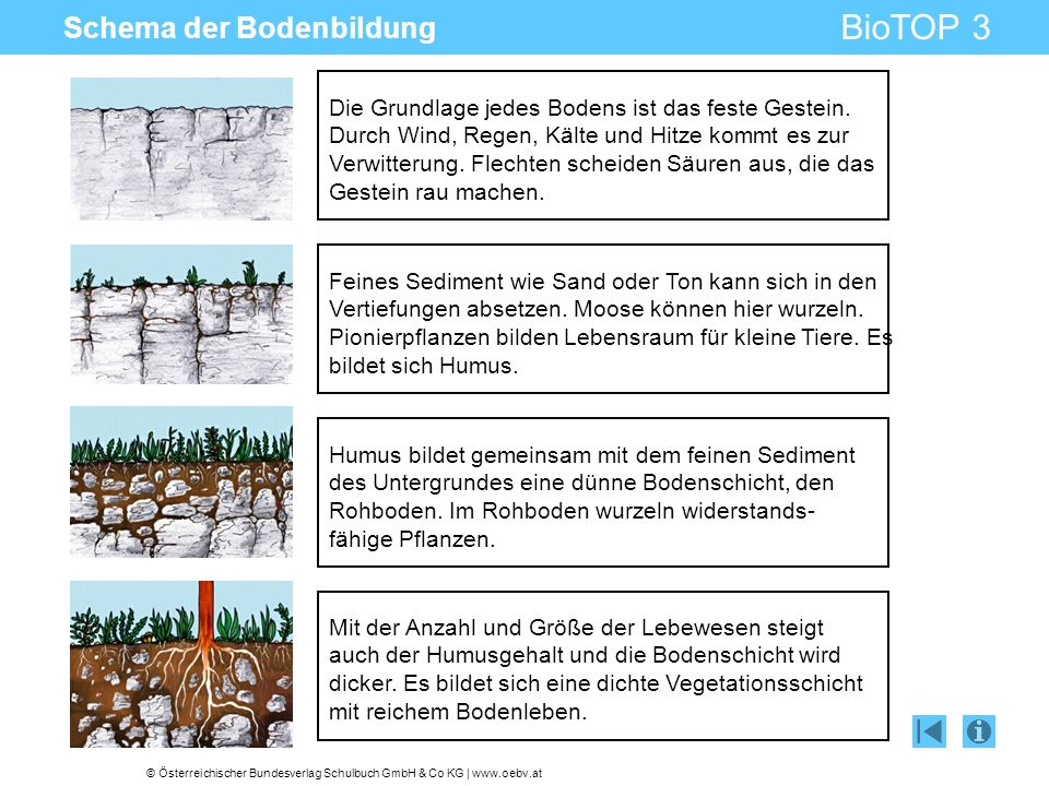 © Österreichischer Bundesverlag Schulbuch GmbH & Co KG | www.oebv.at BioTOP 3 Schema der Bodenbildung Die Grundlage jedes Bodens ist das feste Gestein.