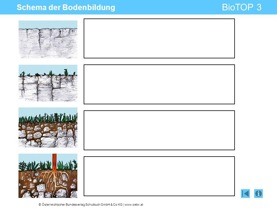 © Österreichischer Bundesverlag Schulbuch GmbH & Co KG | www.oebv.at BioTOP 3 Schema der Bodenbildung