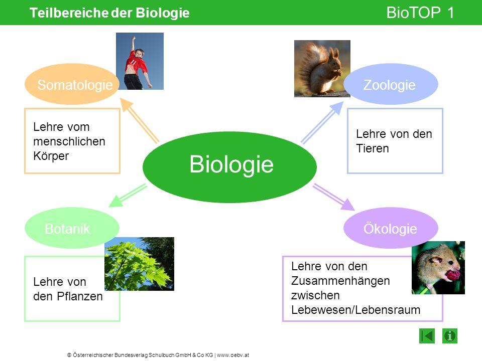 © Österreichischer Bundesverlag Schulbuch GmbH & Co KG | www.oebv.at BioTOP 1 Teilbereiche der Biologie Biologie Lehre vom menschlichen Körper Lehre v