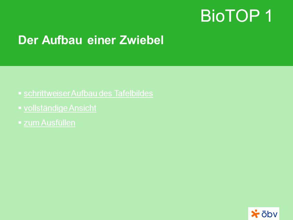 BioTOP 1 Der Aufbau einer Zwiebel schrittweiser Aufbau des Tafelbildes vollständige Ansicht zum Ausfüllen BioTOP 1