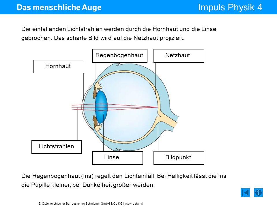 © Österreichischer Bundesverlag Schulbuch GmbH & Co KG | www.oebv.at Impuls Physik 4 Das menschliche Auge Die einfallenden Lichtstrahlen werden durch