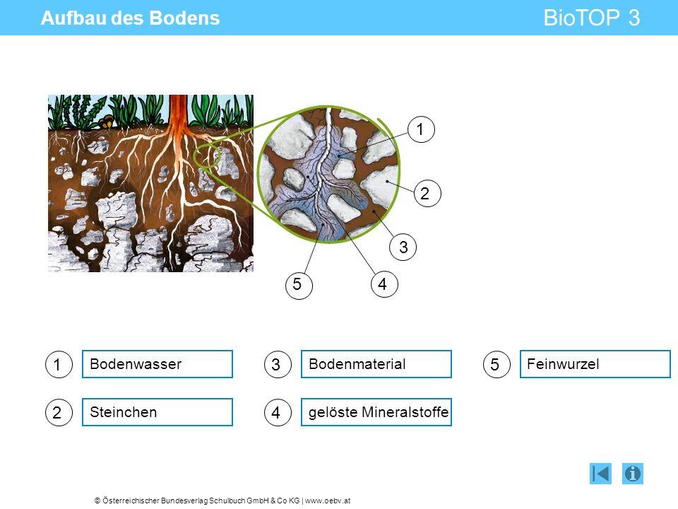 © Österreichischer Bundesverlag Schulbuch GmbH & Co KG | www.oebv.at BioTOP 3 Aufbau des Bodens 1 Bodenwasser 2 Steinchen 3 Bodenmaterial 4 gelöste Mi