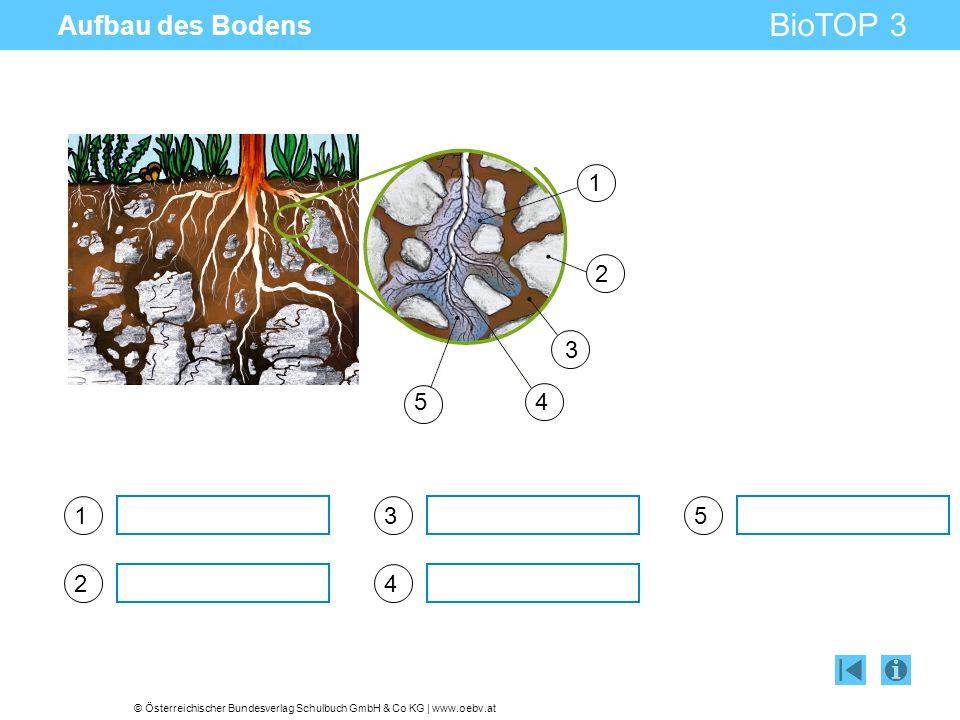 © Österreichischer Bundesverlag Schulbuch GmbH & Co KG | www.oebv.at BioTOP 3 Aufbau des Bodens 1 2 3 4 5 1 2 3 45