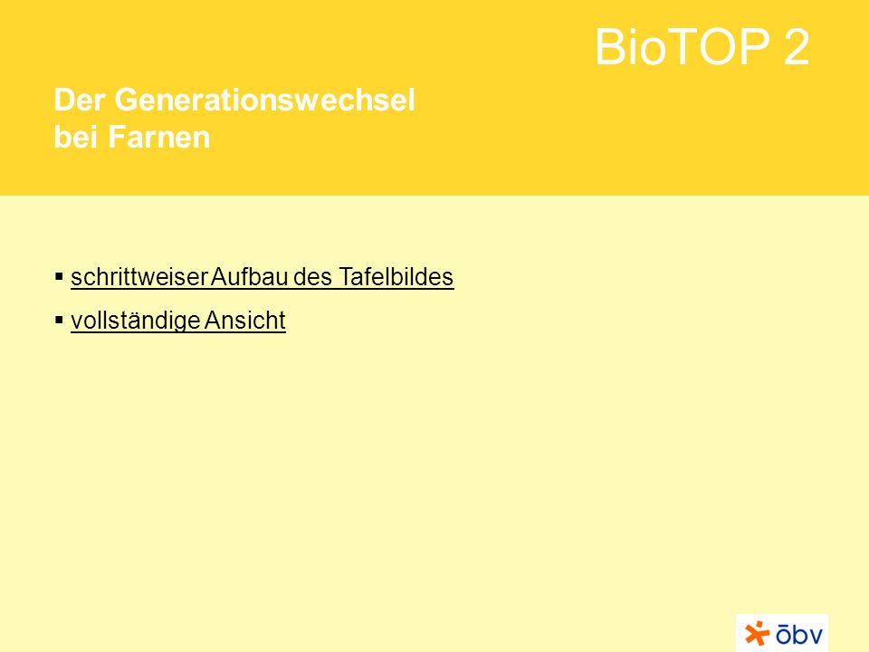 BioTOP 2 Der Generationswechsel bei Farnen schrittweiser Aufbau des Tafelbildes vollständige Ansicht