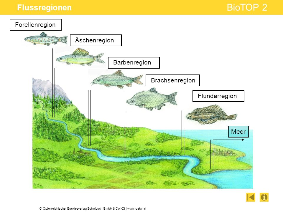 © Österreichischer Bundesverlag Schulbuch GmbH & Co KG | www.oebv.at BioTOP 2 Flussregionen Forellenregion Äschenregion Barbenregion Brachsenregion Fl
