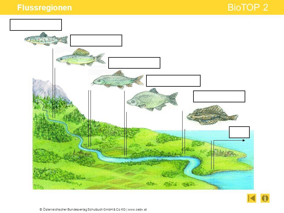 © Österreichischer Bundesverlag Schulbuch GmbH & Co KG | www.oebv.at BioTOP 2 Flussregionen