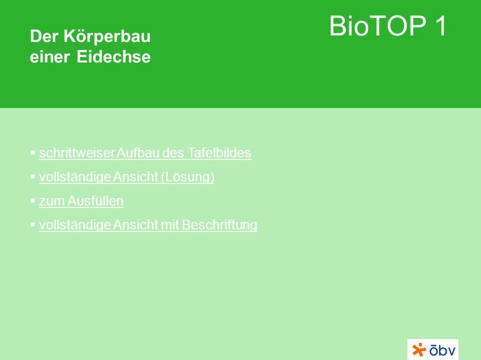© Österreichischer Bundesverlag Schulbuch GmbH & Co KG | www.oebv.at BioTOP 1 Der Körperbau einer Eidechse 1 2 3 4 5 6 7 8 Schädel Schulterblatt Rippen Wirbelsäule Becken Schwanz Armskelett Beinskelett 1 2 3 4 5 6 7 8