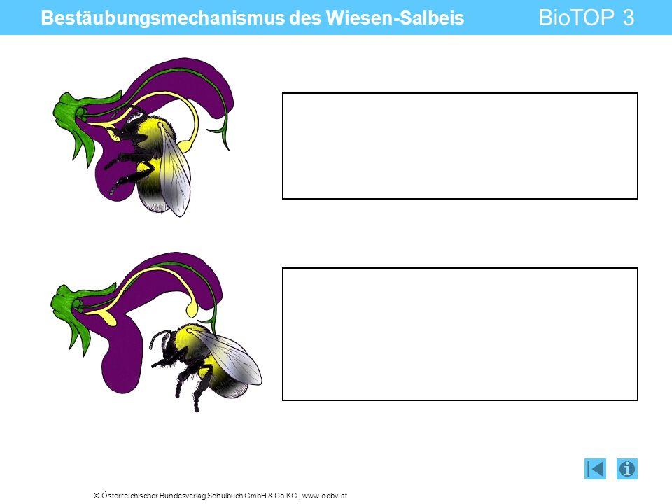© Österreichischer Bundesverlag Schulbuch GmbH & Co KG | www.oebv.at BioTOP 3 Tafelbildinfo Impressum © Österreichischer Bundesverlag Schulbuch GmbH & Co.