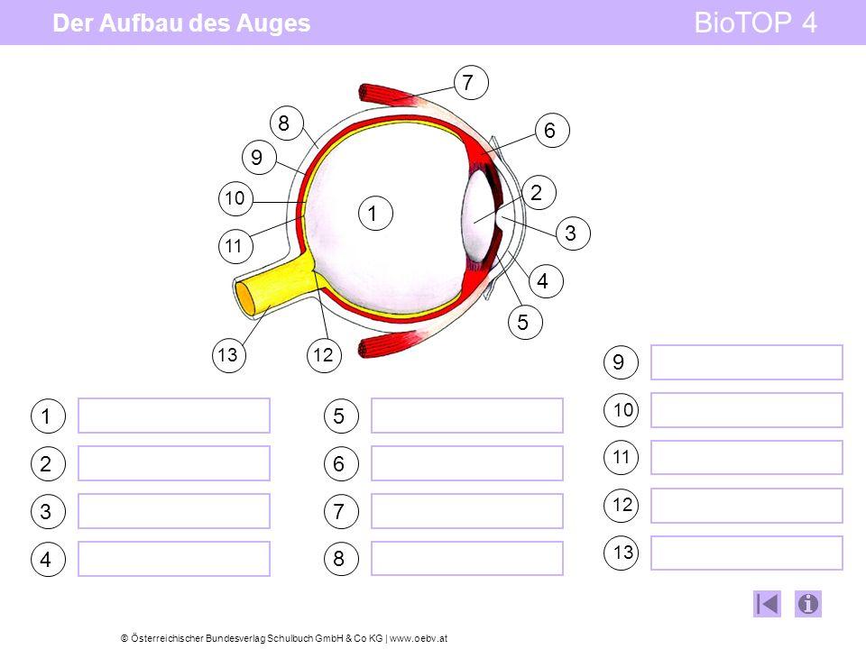 © Österreichischer Bundesverlag Schulbuch GmbH & Co KG | www.oebv.at BioTOP 4 Der Aufbau des Auges 1 2 3 4 5 6 7 8 9 101112 1 2 3 4 5 7 8 9 10 6 11 12
