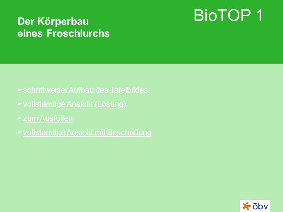 BioTOP 1 Der Körperbau eines Froschlurchs schrittweiser Aufbau des Tafelbildes vollständige Ansicht (Lösung) zum Ausfüllen vollständige Ansicht mit Be
