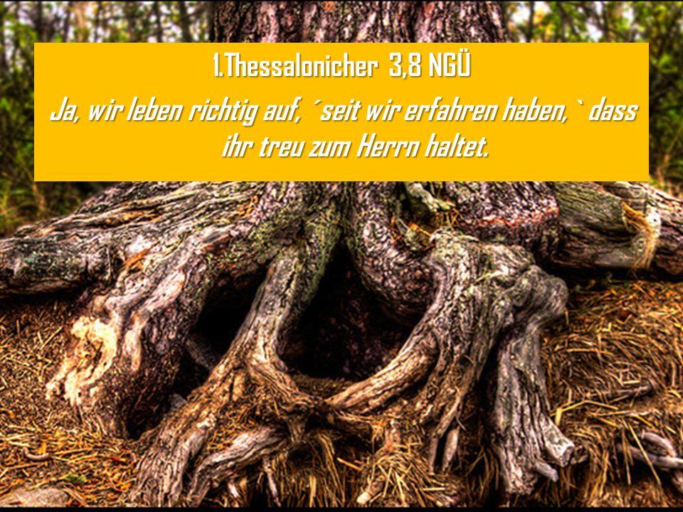 1.Thessalonicher 3,8 NGÜ Ja, wir leben richtig auf, ´seit wir erfahren haben,` dass ihr treu zum Herrn haltet.