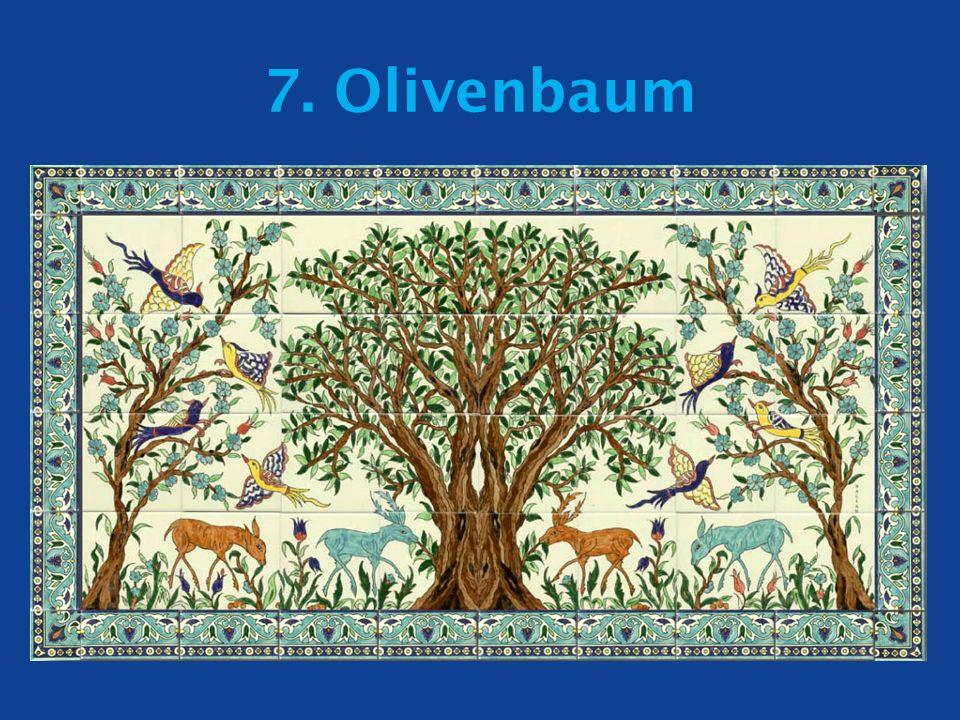 7. Olivenbaum