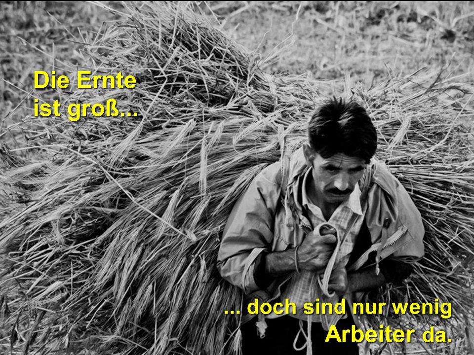 Die Ernte ist groß...... doch sind nur wenig Arbeiter da.
