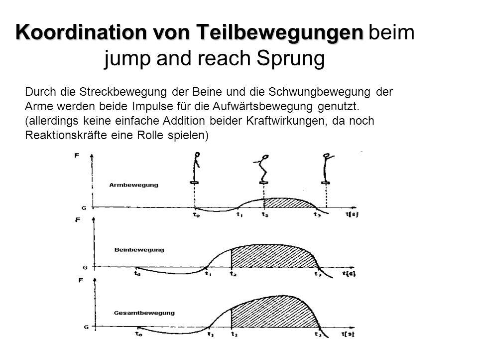 Koordination von Teilbewegungen Koordination von Teilbewegungen beim jump and reach Sprung Durch die Streckbewegung der Beine und die Schwungbewegung