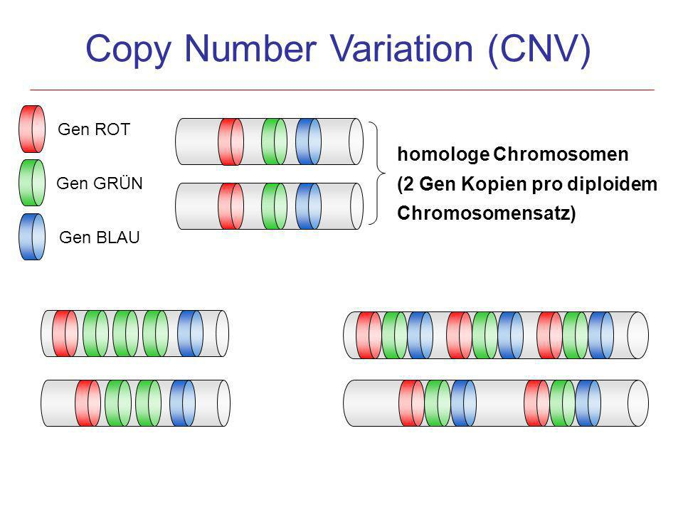 Gen ROT Gen GRÜN Gen BLAU Copy Number Variation (CNV) homologe Chromosomen (2 Gen Kopien pro diploidem Chromosomensatz)