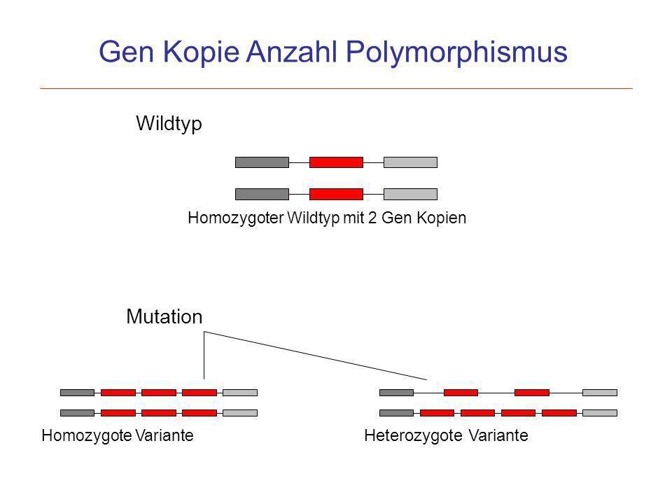 Gen Kopie Anzahl Polymorphismus Wildtyp Homozygoter Wildtyp mit 2 Gen Kopien Homozygote Variante Mutation Heterozygote Variante