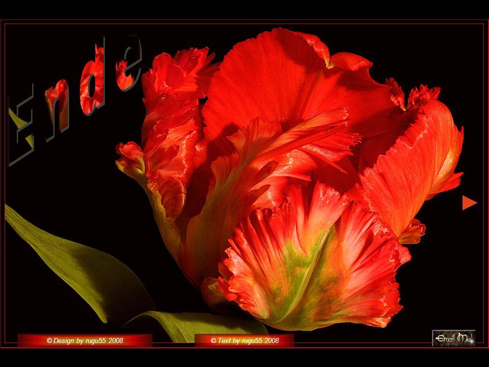 © Design by rugu55 2008© Text by rugu55 2008