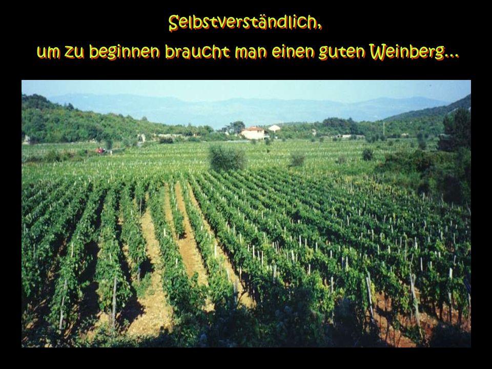 Das Geheimnis des guten Weins.