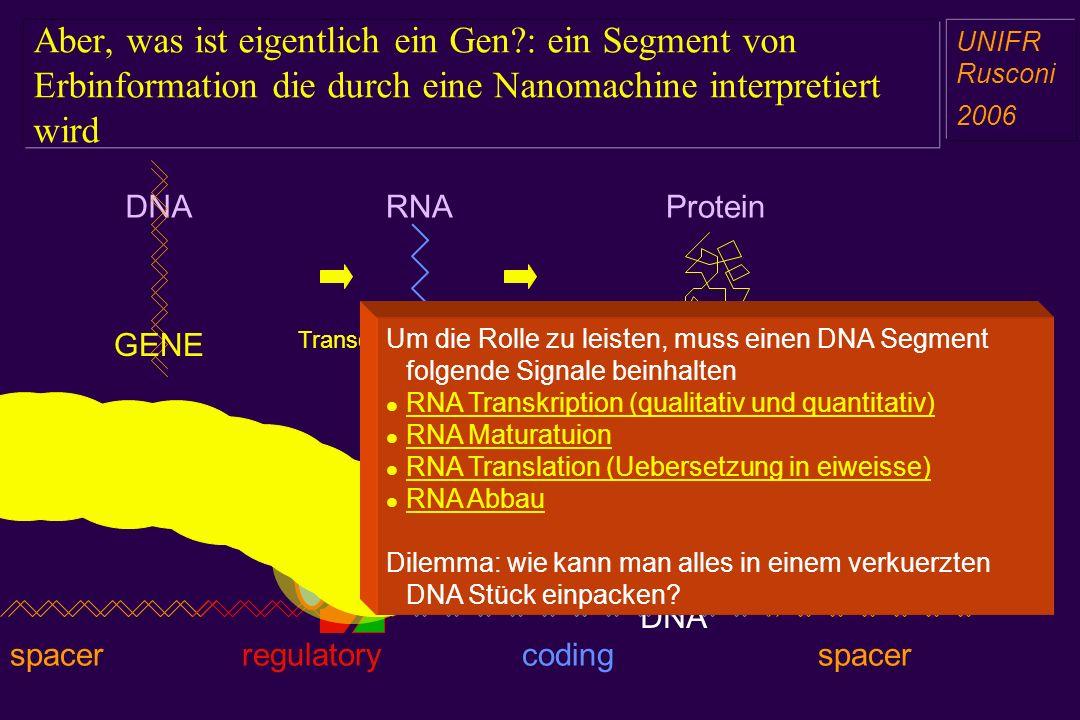Aber, was ist eigentlich ein Gen?: ein Segment von Erbinformation die durch eine Nanomachine interpretiert wird a aa a aa RNADNAProtein GENEFUNCTION T