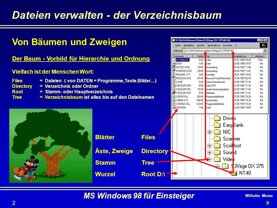 Wilhelm Moser MS Windows 98 für Einsteiger Dateien verwalten - der Verzeichnisbaum Der Baum - Vorbild für Hierarchie und Ordnung Wurzel Stamm Äste, Zw