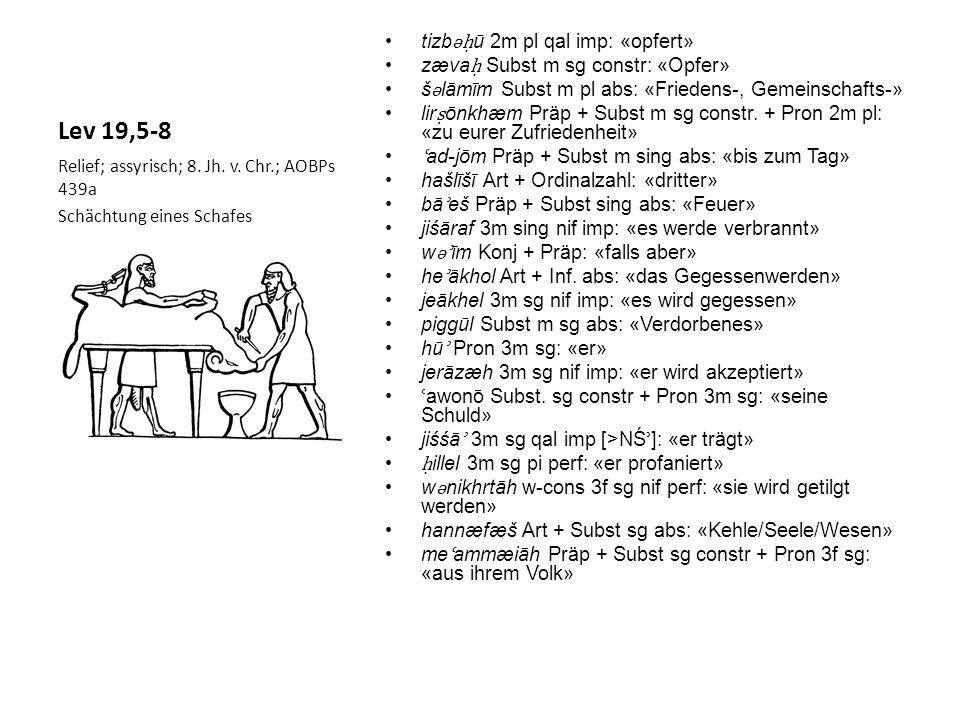 Lev 19,5-8 tizb ǝ ū 2m pl qal imp: «opfert» zæva Subst m sg constr: «Opfer» š ǝ lāmīm Subst m pl abs: «Friedens-, Gemeinschafts-» lir ōnkhæm Präp + Subst m sg constr.