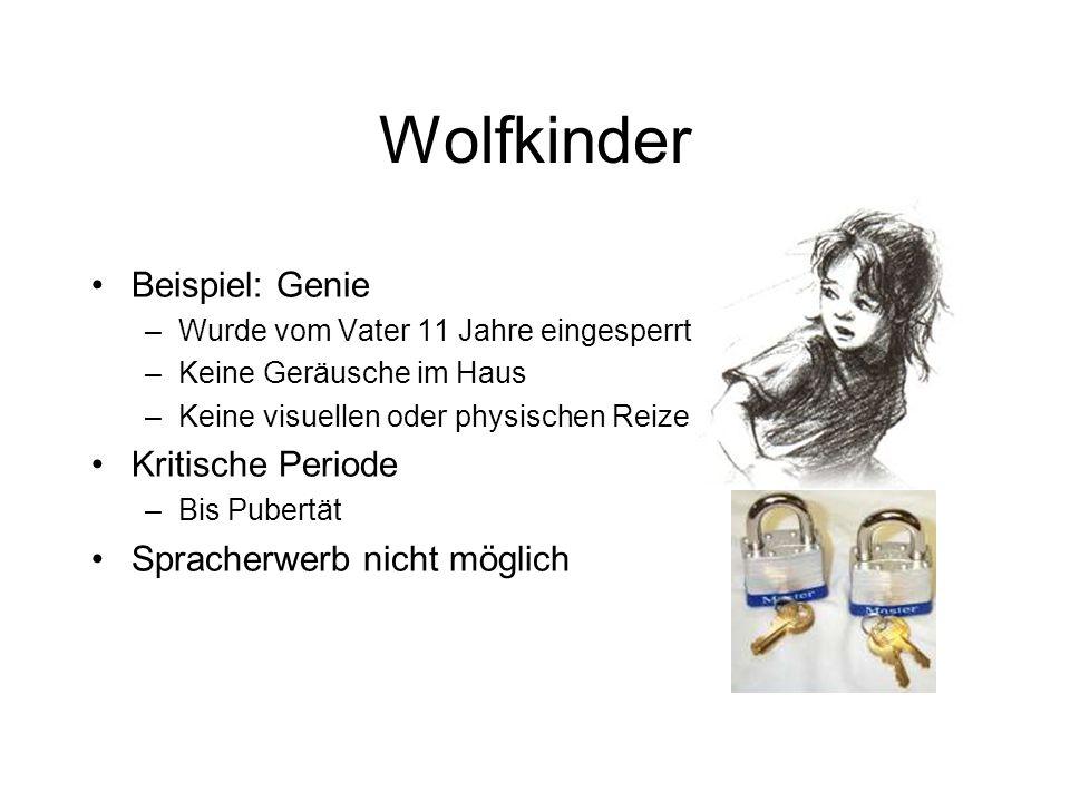 Wolfkinder Beispiel: Genie –Wurde vom Vater 11 Jahre eingesperrt –Keine Geräusche im Haus –Keine visuellen oder physischen Reize Kritische Periode –Bi