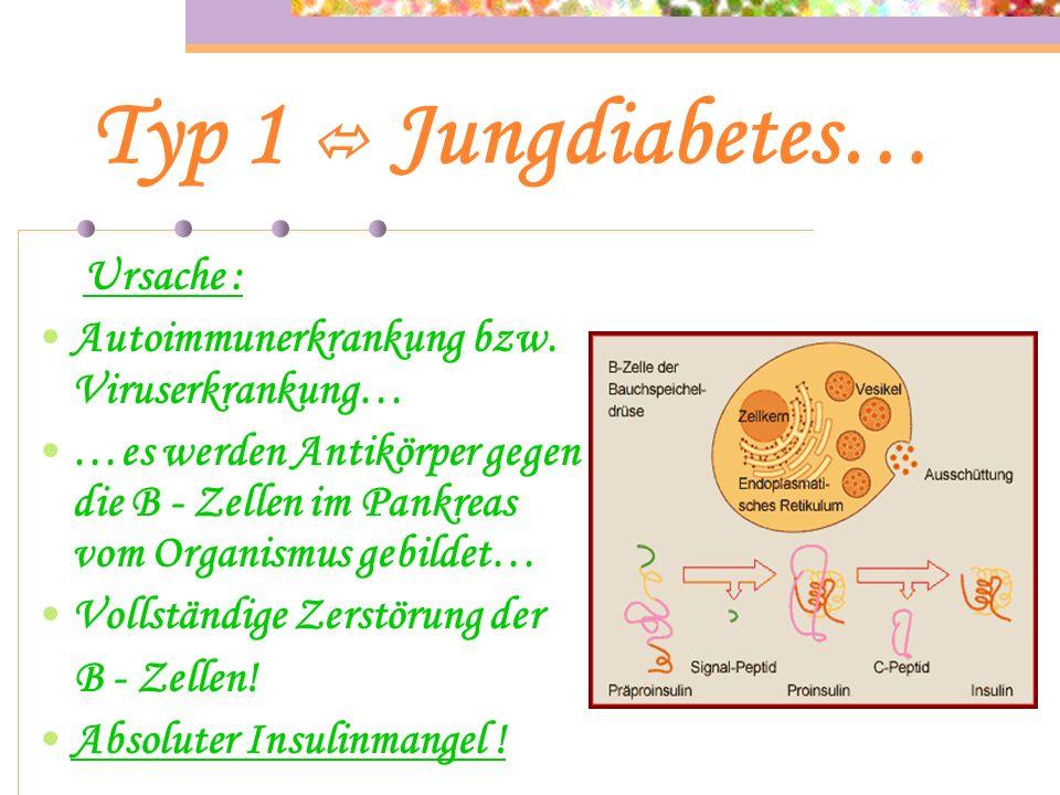 Typ 1 Jungdiabetes… …betroffen sind überwiegend junge Menschen ohne Übergewicht. …insulinabhängiger Diabetes der gekennzeichnet ist durch absoluten In