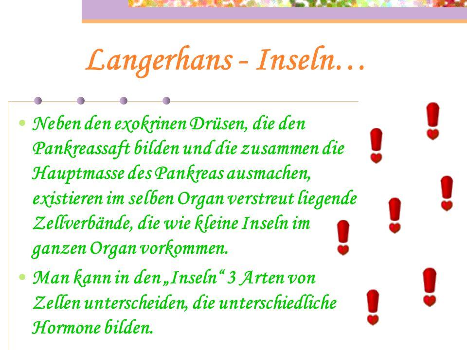 Langerhans - Inseln… Neben den exokrinen Drüsen, die den Pankreassaft bilden und die zusammen die Hauptmasse des Pankreas ausmachen, existieren im selben Organ verstreut liegende Zellverbände, die wie kleine Inseln im ganzen Organ vorkommen.