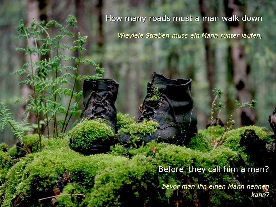 How many roads must a man walk down Wieviele Straßen muss ein Mann runter laufen, Before they call him a man.