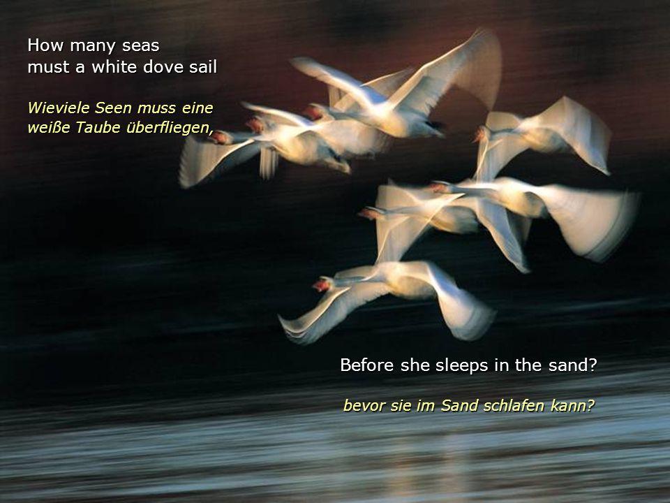 How many seas must a white dove sail Wieviele Seen muss eine weiße Taube überfliegen, Before she sleeps in the sand.