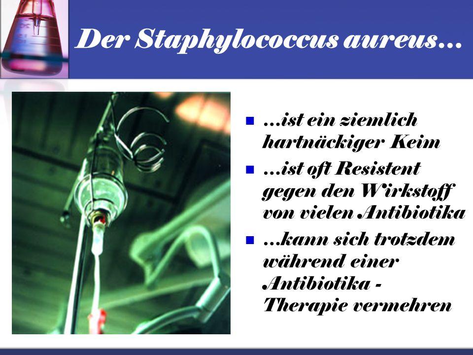 Der Staphylococcus aureus… …ist eine nicht ungefährliche Kugelbakterie …kann gefährliche Infektionen verursachen …ist ein meist gefürchteter Krankenha