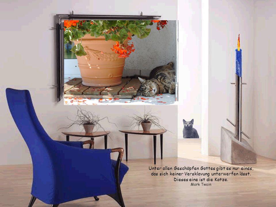 Das kleinste Katzentier ist ein Meisterstück! Leonardo da Vinci