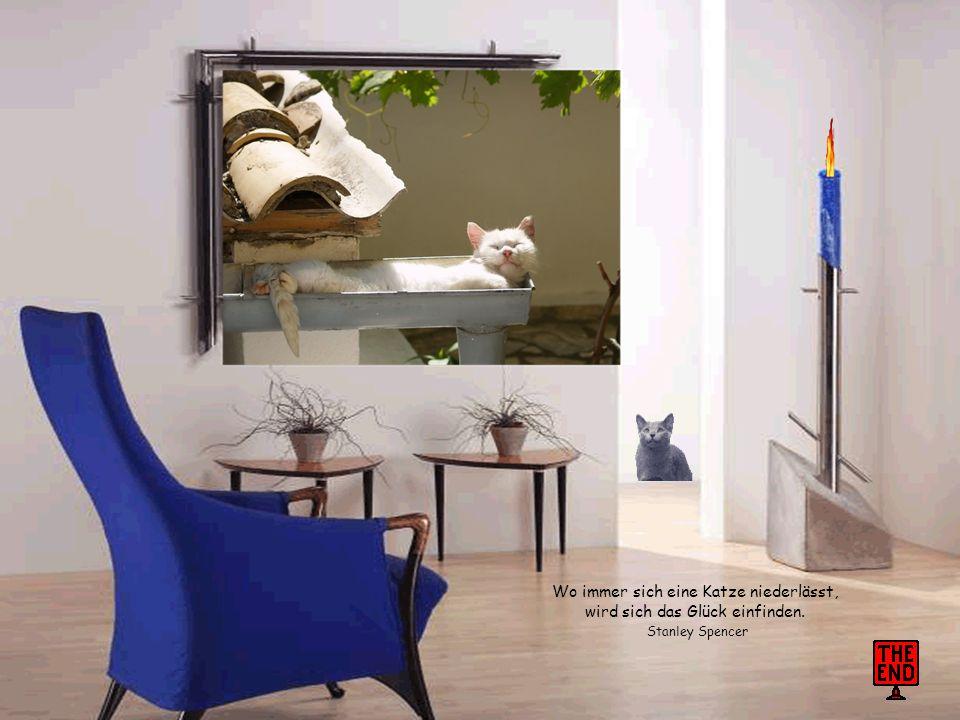 Gott schuf die Katze, damit der Mensch einen Tiger zum Streicheln hat. Victor Hugo